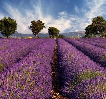 Mit dem Fahrrad durch die Provence: unterwegs auf prominenten Strecken